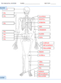 Bones of the Body Labeling Quiz