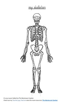 Bones of the Human Body: Colour and Label