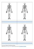 Bones of the Human Body: Outline Masters