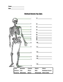 Bones of the Skeleton Quiz