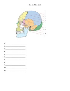 Bones of the skull quiz by everything science and beyond tpt bones of the skull quiz ccuart Images