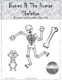 Bones & the Human Skeleton
