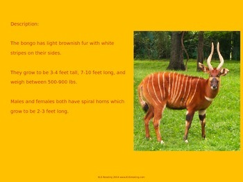 Bongo - Endangered Species Power Point - Great information and pictures
