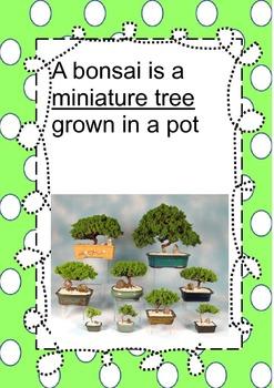 Bonsai Posters