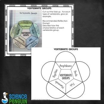 Science Interactive Notebook Activities Bonus Set C