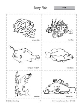 Bony Fish and Salmon Life Cycle