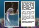 eBook: Where's the Dolphin?