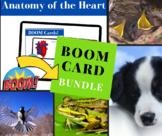 Boom Card Fun Bundle