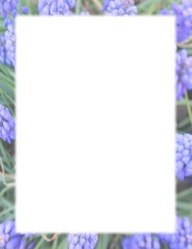 Border-blue flowers