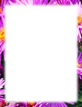 Border-pink flowers