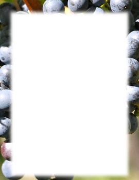 Border-vineyard grapes