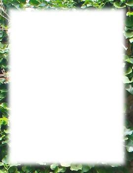 Borders-ivy