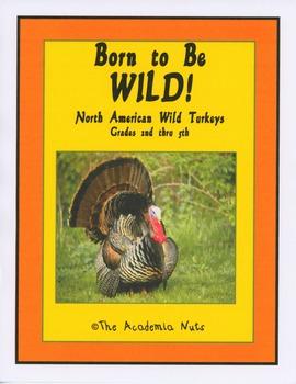 Born to be Wild: North American Wild Turkey