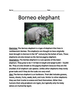 Borneo Elephant - review article information facts questions vocabulary lesson