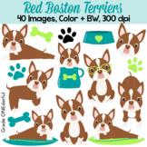 Boston Terrier Clipart, Red Boston Terrier Puppies, Cute D