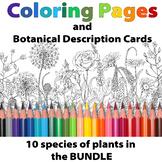 Botanical Coloring Pages/ BUNDLE