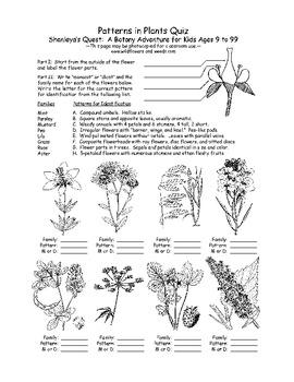 Botany Adventure Lesson Plan: Plant Identification and Evolution