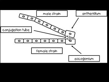 Botany Ascomycota