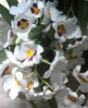Botany / Biology / Life Science Plant Picture Gallery