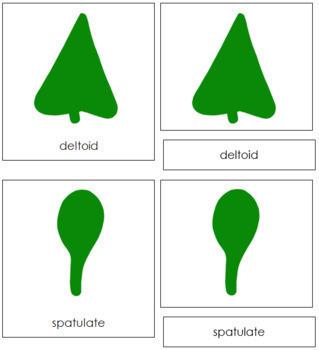 Botany Cabinet Leaf Shapes: 3-Part Cards