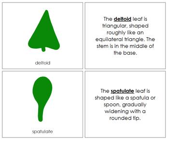 Botany Cabinet Leaf Shapes: Book