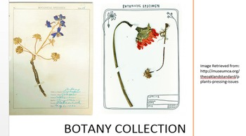 Botany Collection Lesson