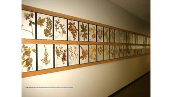 Botany Collection Powerpoint