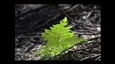 Botany Fern Introduction