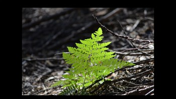 Botany Fern Reproduction