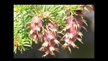 Botany Flower Development