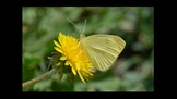 Botany Flower Ecology