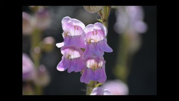 Botany Flower Forms