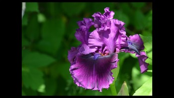 Botany Flower Types