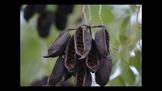 Botany Fruit