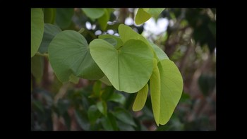 Botany Leaf Types