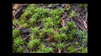 Botany Mosses