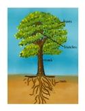 Botany: Parts of a tree