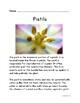 Botany: Pistils