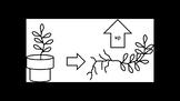 Botany Plant Growth