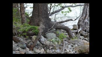 Botany Roots