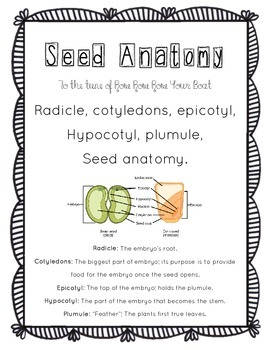Botany: Seed Anatomy Song