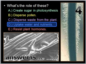 Botany Unit PowerPoint Game