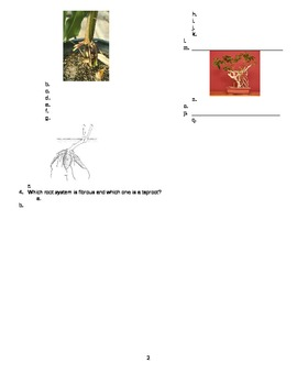 Botany for Horticulture Quiz 3