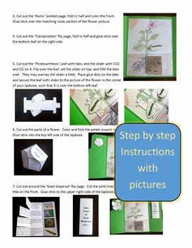 Botany lapbook