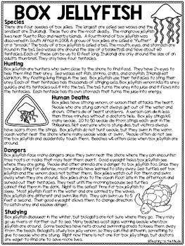 Box Jellyfish Reading Comprehension; Ocean Creatures; Stinging