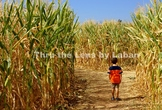 Boy Standing in a Corn Maze Stock Photo #222