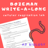 Bozeman WAL (write-a-long): AP Biology Cellular Respiration Lab
