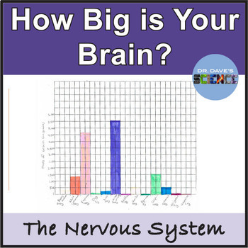 Nervous System: Brain Size