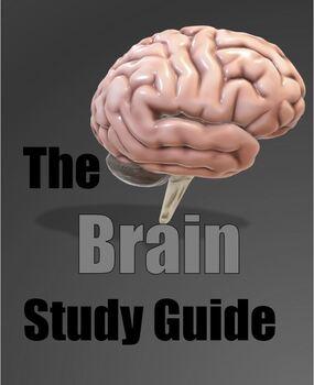 Brain Activity - Interactive Study Presentation