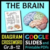 Brain Crossword with Diagram {Editable}